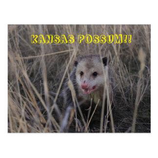 Carte postale d'opossum du Kansas