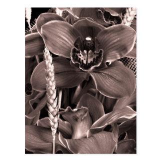 Carte postale d'orchidées et de transitoires de