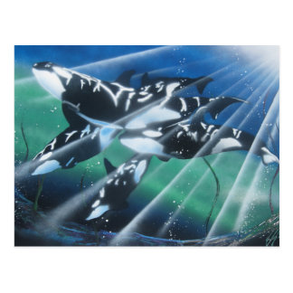 Carte postale d'orque