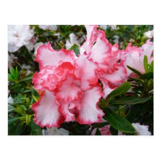 Carte Postale Double ressort rouge et blanc d'azalées floral