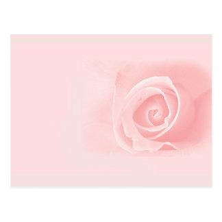 Carte Postale Doucement rose de rose