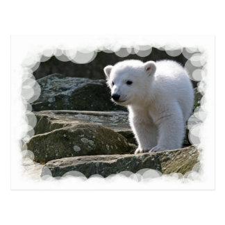 Carte postale d'ours blanc de bébé