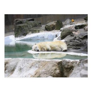 Carte postale d'ours blanc de sommeil