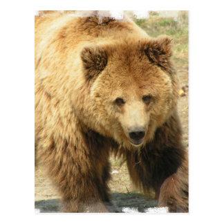 Carte postale d'ours gris