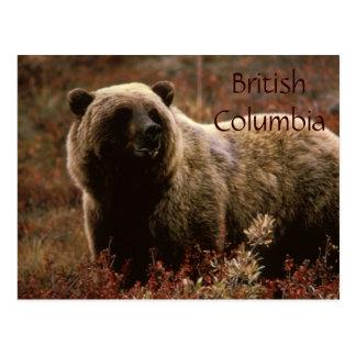 Carte postale d'ours gris de Colombie-Britannique