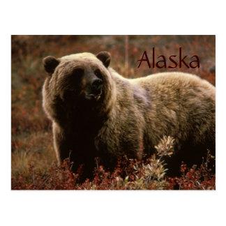 Carte postale d'ours gris de l'Alaska