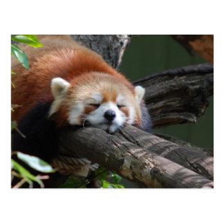 Carte postale d'ours panda de sommeil
