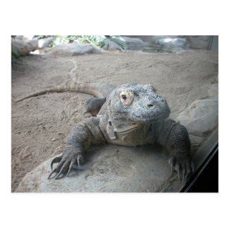 Carte Postale Dragon de Komodo