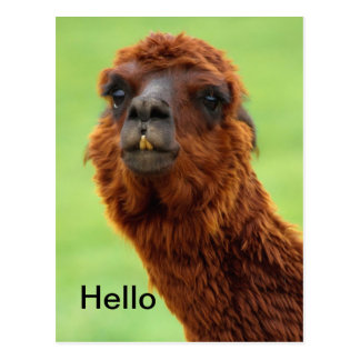 Carte postale drôle de lama - toute l'occasion