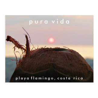 Carte postale du Costa Rica de noix de coco de