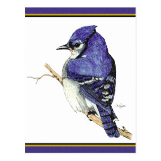 Carte postale du geai bleu 2