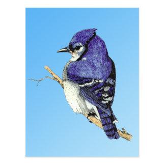 Carte postale du geai bleu 3