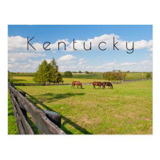 Carte postale du Kentucky, chevaux à la ferme de