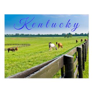 Carte postale du Kentucky. Chevaux à la ferme de