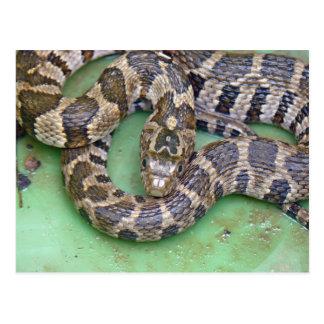 Carte postale du nord de serpent d'eau
