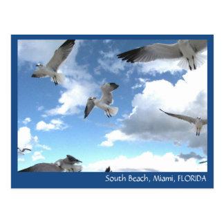 Carte postale du sud de mouettes de Miami la