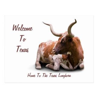 Carte postale du Texas Longhorn