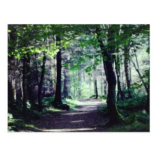 Carte postale d'une promenade de région boisée en
