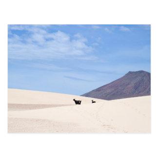 Carte Postale Dunes de Corralejo, Fuerteventura, Îles Canaries,