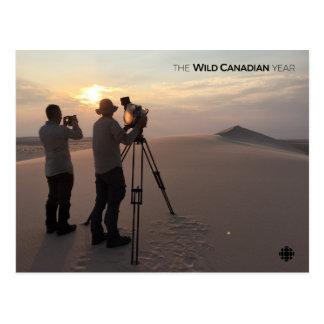 Carte Postale Dunes de sable d'Athabasca