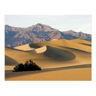 Carte Postale Dunes de sable de Death Valley…