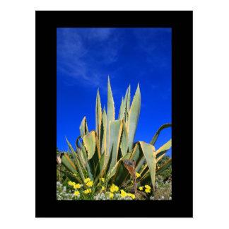 Carte postale d'usine d'agave