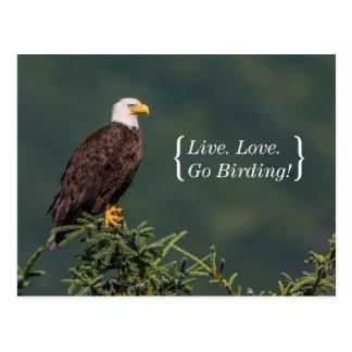 Carte Postale Eagle chauve majestueux