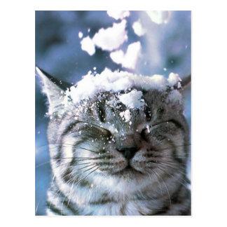 Carte Postale Éclaboussure de neige de chat tigré
