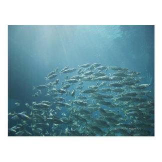Carte Postale École des poissons, Nassau, Bahamas