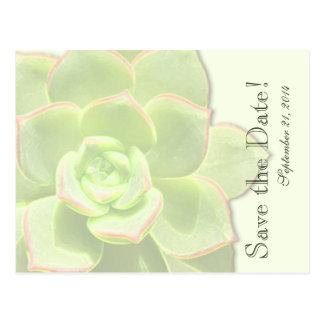 Carte Postale Économies vertes translucides de Succulent la date
