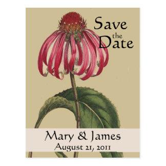 Carte Postale Économies vintages de Botanicals Coneflower la