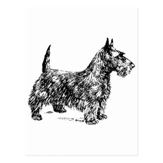 Carte Postale Écossais Terrier