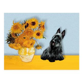 Carte Postale Écossais Terrier 3 - tournesols