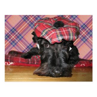 Carte Postale Écossais Terrier dans un Tam-o-Shanter