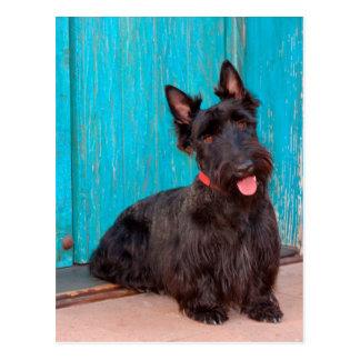 Carte Postale Écossais Terrier se reposant par la porte colorée
