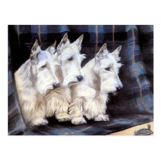 Carte postale écossaise blanche vintage de
