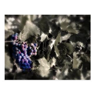 Carte Postale Écrasement au vignoble de canalisation de caves de