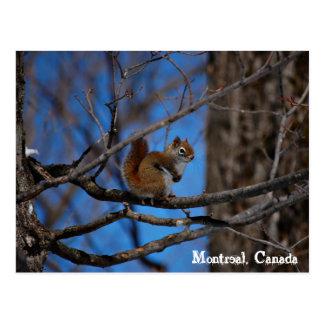 Carte Postale Écureuil à Montréal