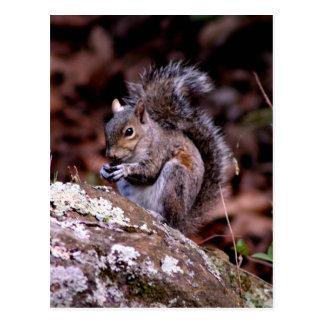 Carte Postale Écureuil appréciant son repas