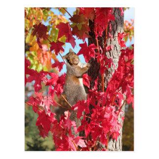 Carte Postale Écureuil dans l'arbre rouge d'automne