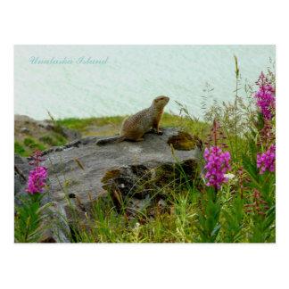 Carte Postale Écureuil de Parkee par l'eau, île d'Unalaska