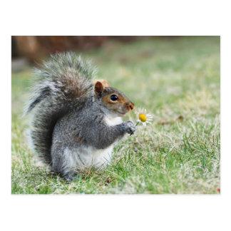Carte Postale écureuil de sourire avec la marguerite
