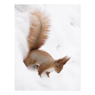 Carte Postale Écureuil d'hiver