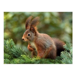 Carte Postale Écureuil mignon