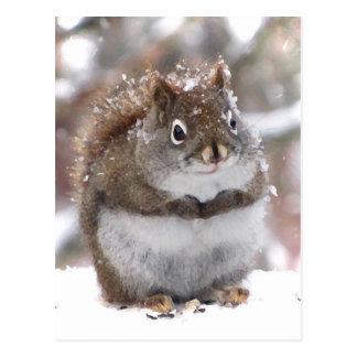 Carte Postale Écureuil rouge doux