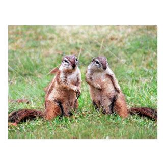 Carte Postale Écureuils jumeaux
