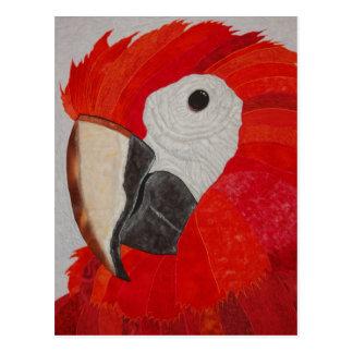 Carte Postale Édredon de perroquet