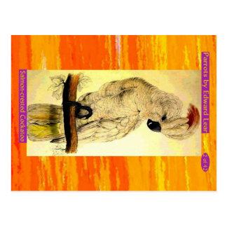 Carte Postale Edward Lear. Cockatoo. Saumon-crêté