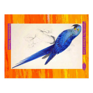 Carte Postale Edward Lear. Macaw. de Hyacinthine
