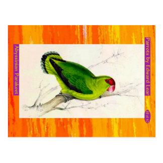 Carte Postale Edward Lear. Parakeet. abyssinien